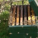 bijenzwerm in tijdelijk bijenkastje
