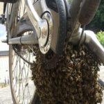 bijenzwerm onder fiets