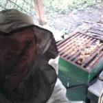 Controle bijenkasten bijentuin Zeewolde
